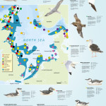 Poster zeevogels RWS & VBN
