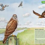 informatiepaneel Jisp, roofvogels