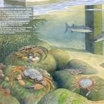 Onderwaterleven Jachthaven Oudeschild