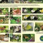 Informatiepaneel vlindertuin Zeewolde