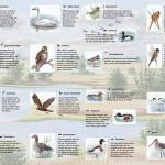 SBB vogelkaart_01