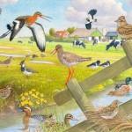 Illustratie voor weidevogelboerderijen