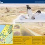 Informatiepaneel_Staatsbosbeheer De Muy, Texel