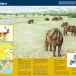 informatiepaneel_Staatsbosbeheer_De_Maire