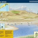 informatiepaneel_Staatsbosbeheer_Natte_duinen