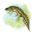 kleine watersalamander (02)